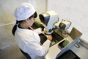 Проверка качества пайки под микроскопом